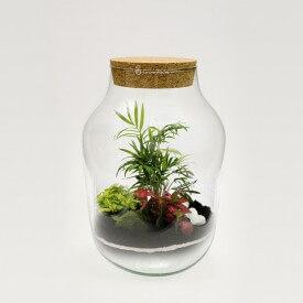 DIY - las w słoiku sloj z korkiem kora, growitbox
