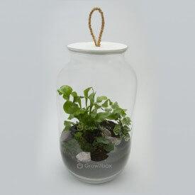 DIY - las w słoiku growitbox, growitbox.com, Asplenium, bluszcz, hemionitis cherry