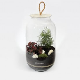 las w słoiku growitbox.com