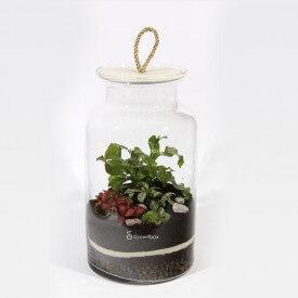 DIY - las w słoiku growitbox,  growitbox.com