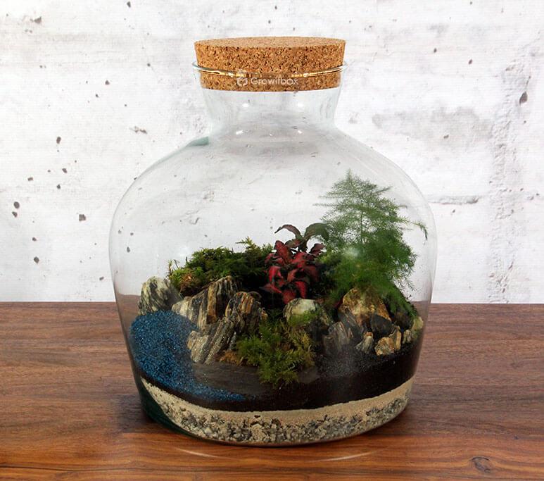 las w sloiku growitbox