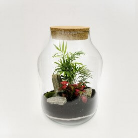Jar 37cm palm tree with fitonia red stone bark DIY kits