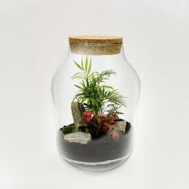 Pot de 37cm palmier avec phytonie forêt de pierre à écorce rouge dans un pot DIY