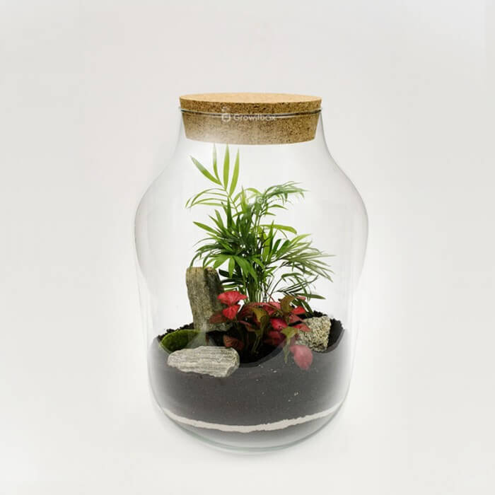 Jar 37cm palm tree with fitonia red stone bark Forest in a jar DIY kits