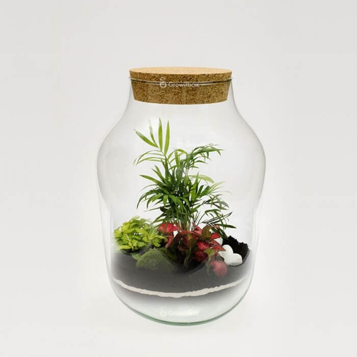 Jar of 37cm palm fitonia red green stone macedonian Forest in a jar DIY kits