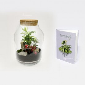 "Palm set 37cm jar with the guide ""Green up"" Forest in a jar DIY kits"