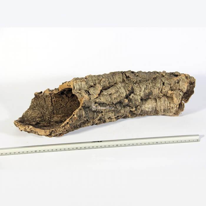 Kora z Dębu Korkowego rozmiar M Strona główna
