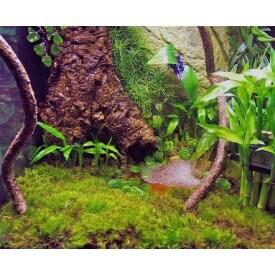 Terrarium Moss - mech do terrarium Mchy