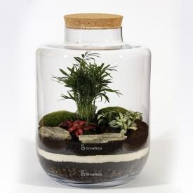 Pot de 40 cm en palmier avec phytonie rouge et verte Forêt dans un pot Bricolage