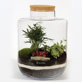Bocal 40cm Palmier avec phytonie rouge et lierre blanc Forêt dans un bocal DIY