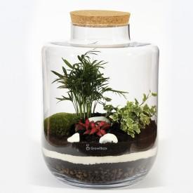 Bocal 40cm Palmier avec phytonie rouge et lierre blanc Pierre de Macédoine Forêt dans un bocal Bricolage