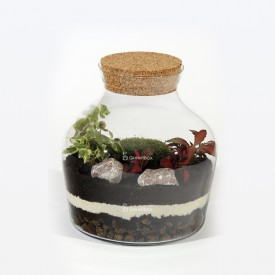 Jar 21cm Fitonia red, white ivy DIY kits