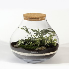 Forest jar 30cm of fern, fitonia, white ivy DIY kits