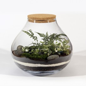 Forest jar 30cm of fern, fitonia, white ivy lava pebble DIY kits