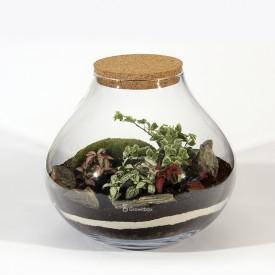 Pot de 30 cm Phyton de la forêt, lierre blanc de la forêt dans un pot Bricolage