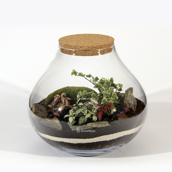 Forest jar 30cm of fitonia, white ivy cushion moss Forest in a jar DIY