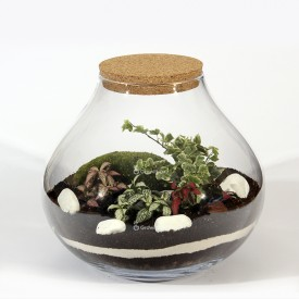 Forest jar 30cm of fitonia, white ivy cushion moss, macedonian stone DIY kits