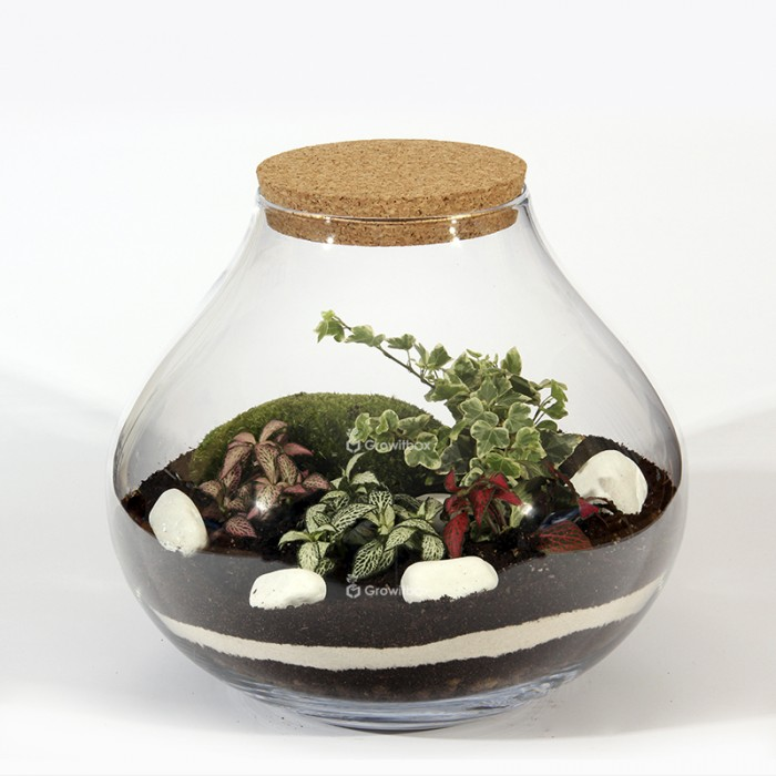 Forest jar 30cm of fitonia, white ivy cushion moss, macedonian stone Forest in a jar DIY kits
