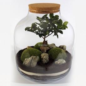 38cm Ficus-Glas mit Moosen DIY-Wald im Glas DIY-Wald im Glas