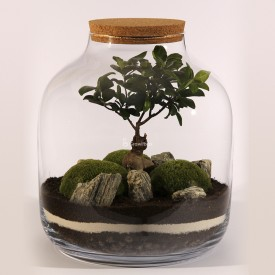 Jar 38cm Ficus with mosses DIY forest kit in a jar Forest in a jar DIY kits