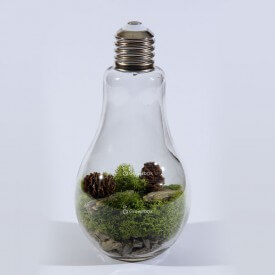 copy of glass light bulb Home