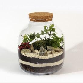 Bricolage composition jarre 30cm fougère, lierre phytonia Forêt dans une jarre Bricolage