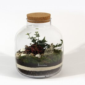 Jar 30cm Fitonia, ivy colorful pebble Home
