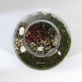 Jar 30cm Fitonia, ivy colorful pebble Forest in a jar DIY kits