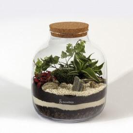 Bricolage composition pot 30cm herbe, phytonia lierre forêt dans un pot Bricolage