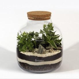 Composition DIY jar 30cm ivy, fern adiantum, Chlorophytum laxum DIY kits