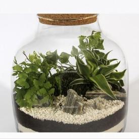 Composition DIY jar 30cm ivy, fern adiantum, Chlorophytum laxum Forest in a jar DIY kits