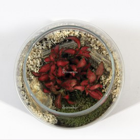 """Jar 24cm """"bullet"""" red fittonia Home"""