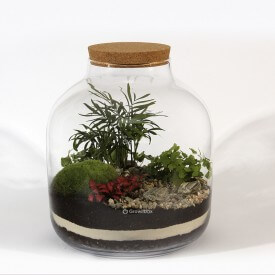"38cm Glas ""Barrel"" Palmenkomposition mit Farnsatz DIY-Wald im Glas DIY-Wald im Glas"