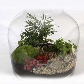 "Jar 38cm ""keg"" Composition Palm, fern set DIY forest in a jar DIY kits"