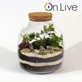 Warsztaty online Słój30cm z paprocią las w słoiku growitbox Warsztaty