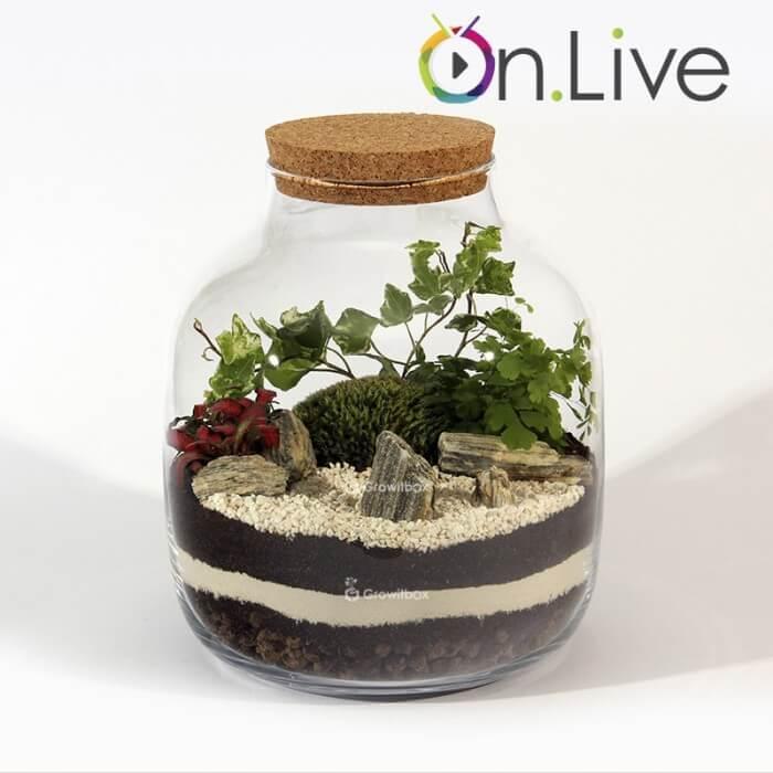 Warsztaty online Słój30cm z paprocią las w słoiku growitbox Home