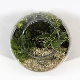 Warsztaty online Zielony słój 30cm las w słoiku growitbox Strona główna