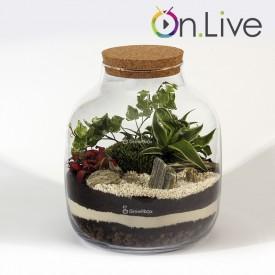Warsztaty online słój 30cm zielistka las w słoiku growitbox Workshops