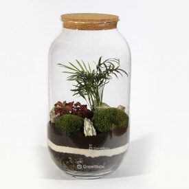 Jar 42 cm Palm red fitonnia cushion moss with stone bark Forest in a jar DIY kits