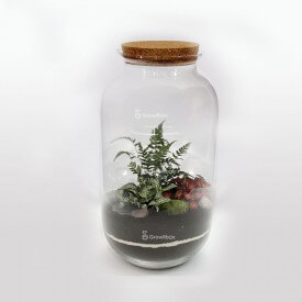 Jar 42 cm Fern fitonnia with cherry stone Forest in a jar DIY kits