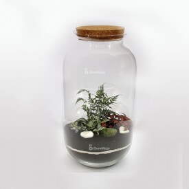Jar 42 cm Fern fitonnia with macedonian stone Forest in a jar DIY kits