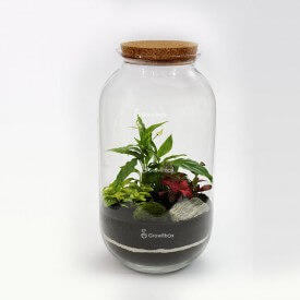 Jar 42 cm with Spathiphyllum, red and green fitonia, bark stone Forest in a jar DIY kits