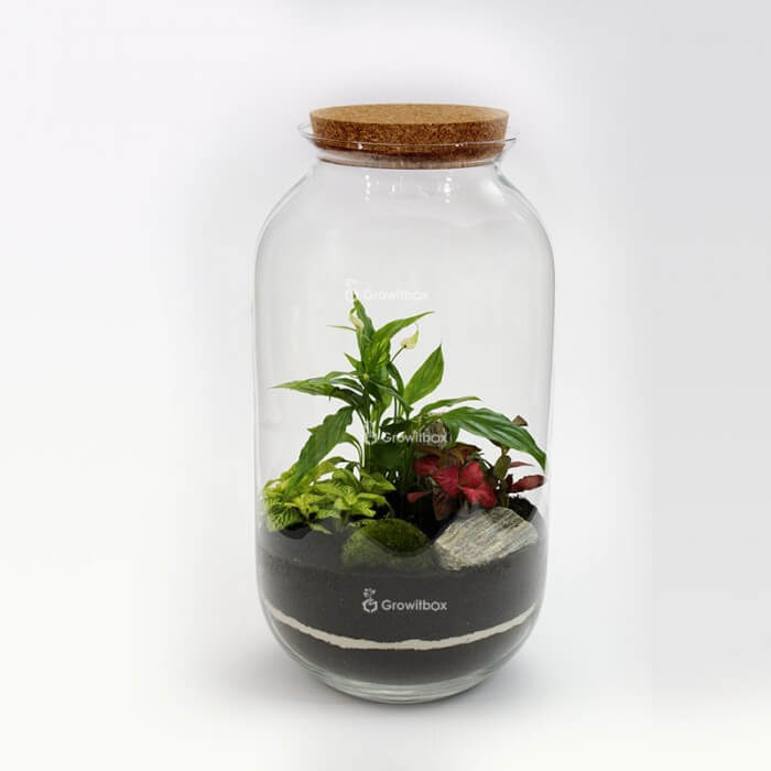 Jar 42 cm with Spathiphyllum, red and green fitonia, bark stone DIY kits