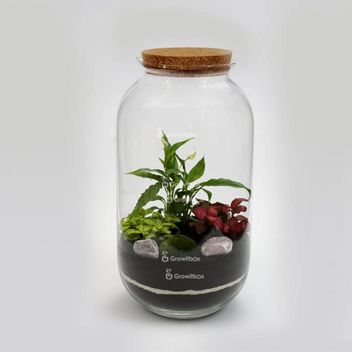 Jar 42 cm with Spathiphyllum, red and green fitonia, cherry stone Forest in a jar DIY kits