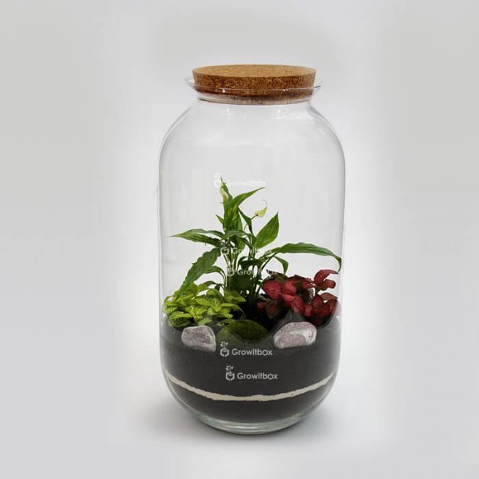Słój 42cm Skrzydłokwiat z fitonią czerwoną i zieloną otoczak cherry Las w słoiku DIY