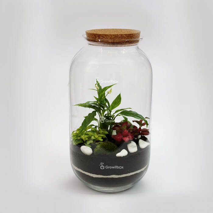 Jar 42 cm with Spathiphyllum, red and green fitonia, macedonian stone DIY kits