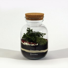 Jar 24cm set with a Selaginella martensii Forest in a jar DIY kits