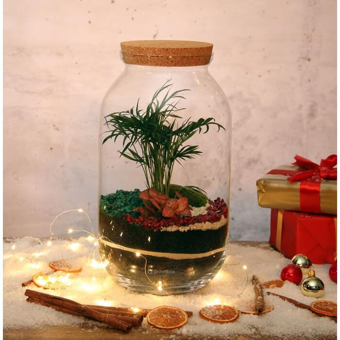Christmas forest with palm and fittonia Home