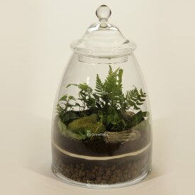 Jar 40cm Fern, ivy DIY forest kit in a jar Forest in a jar DIY kits