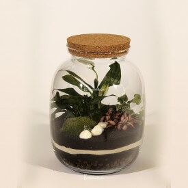 Jar 32cm Spathiphyllum, ivy, phytonia DIY forest kit in a jar Forest in a jar DIY kits